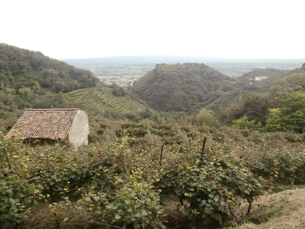 P9137119 1024x768 Le colline del Prosecco