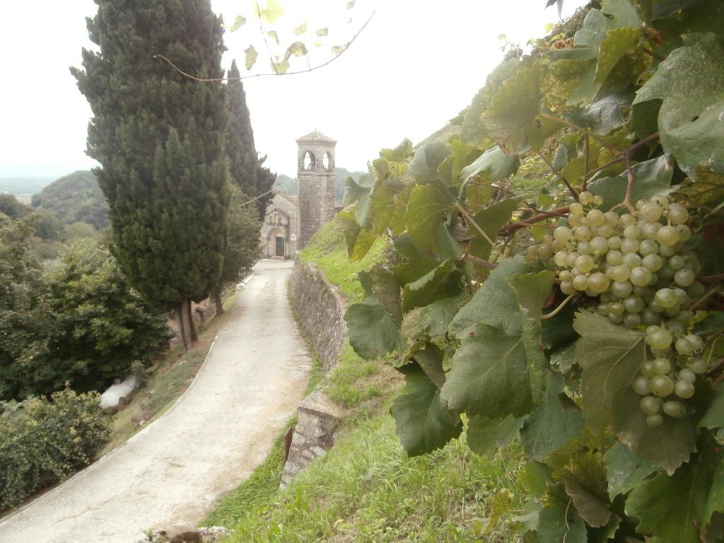 P9137140 1024x768 Le colline del Prosecco